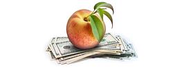 FDI NORTH AMERICA: CHASING THE DIXIE DOLLAR