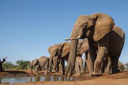 Data vs Data In Poaching Standoff