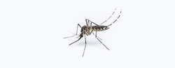 Zika A Public Health, Not An Economic, Crisis