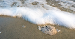The Sand Dollar: Digital Currency Of The Bahamas