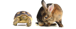 Fintech: The Tortoise And The Hare